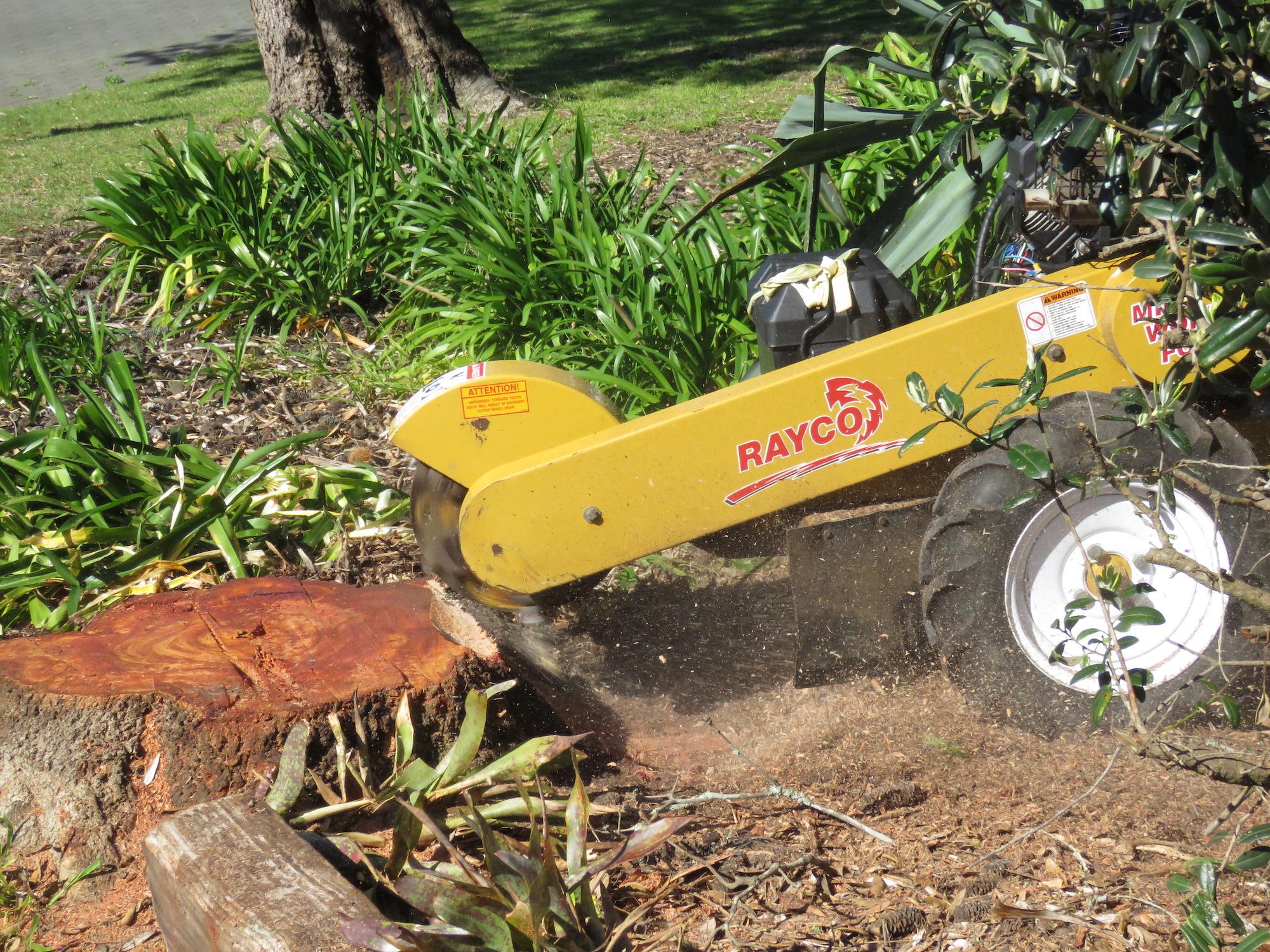 Arborist Tauranga | Stump Grinding Waikato | Landscaping Services